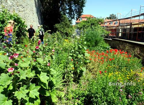 Domgarten in Erfurt