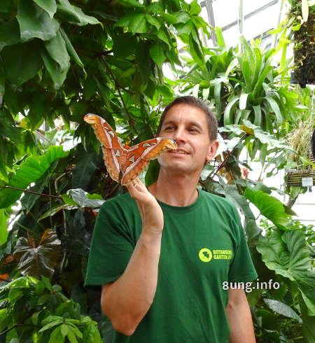 Riesenschmetterling im Botanischen Garten von Jena
