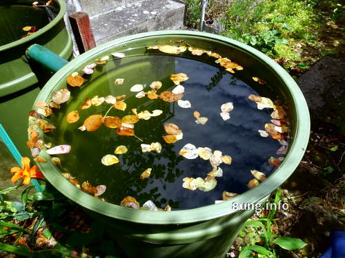 prallvolle Regentonnen mit Laub auf dem Wasserspiegel
