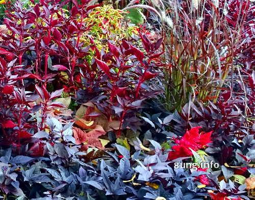 rote, schwarze, orange, grüne Blätter