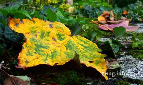 gelbgruenes Blatt im Herbst
