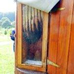 gläserner Bienenstock