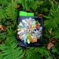 """Buch """"Flora"""" im grünen Farn"""
