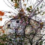 Baum in Herbst mit rosa Blüten