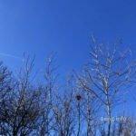 Baumwipfel mit Nest, blauer Himmel