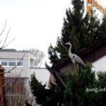 Graureiher auf dem Baum im Garten