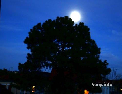Vollmond mit Hof hinter einem Baum, blauer Himmel