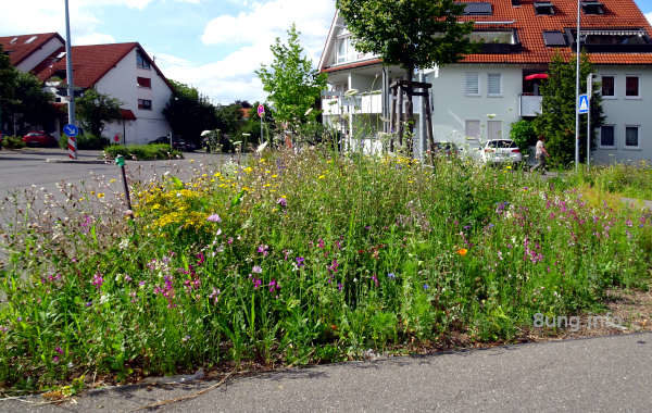 Blumeninsel im Sommer