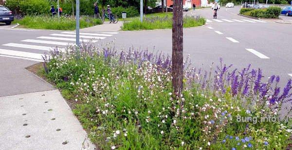 Blumeninseln mit Wildblumen für Schmetterlinge, Bienen und Käfer