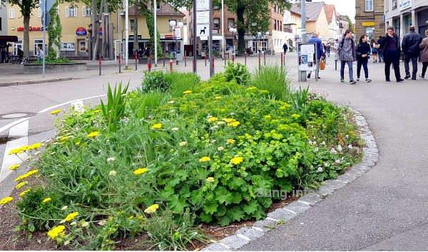 Blumeninsel in Richtung Fußgängerzone