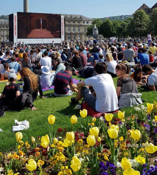 Blühende Tulpen, Zuschauer , große Leinwand beim Trickfilmfestival
