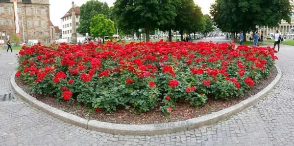 Rondell mit roten Rosen im Schlosspark von Stuttgart