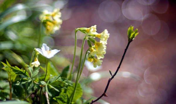 Frühlingsblumen am Bachrand