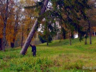 Bild des Tages - Der Mann, der Baum und der Herbst | Kulturmagazin 8ung.info