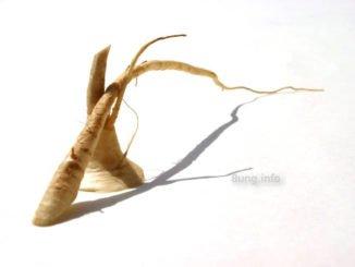 Wurzelgemüse mit Schatten