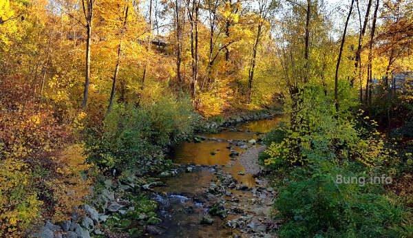 gelbes Herbstlaub, Bach mit Steinen