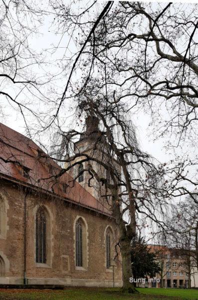 Blick durch die kahlen Baumriesen auf den Turm der Martinskirche