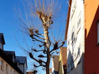 Blauer Himmel, kahler Baum
