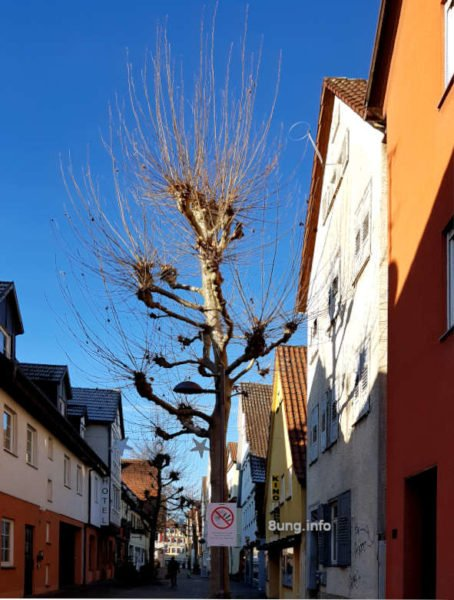 Monatswetter 2020 Juli: Blauer Himmel, kahler Baum