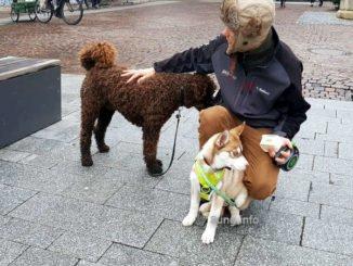 Hundebesitzer mit Welpen und Hund