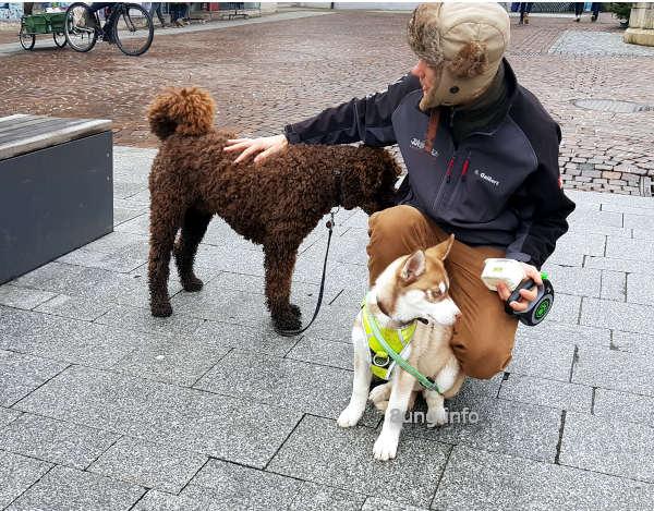 Wetterprognose November 2020: Hunde mögen jedes Wetter