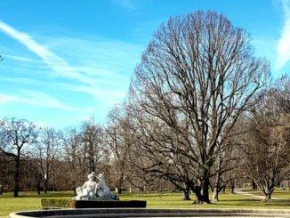 Bäume im Rosensteinpark im Winter