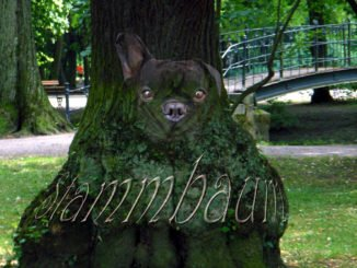 Stammbaum Fotomantage