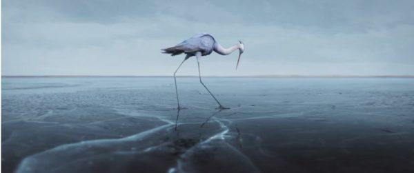 """Unter dem Eis: Trickfilm """"Sous la Glace"""" Reiher"""
