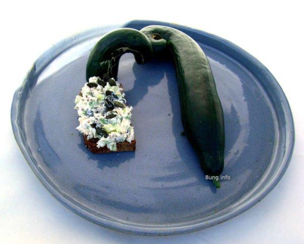 Forelle, Gurke, Kürbiskerne im Frischkäse auf einer Keramikplatte fertig angerichtet