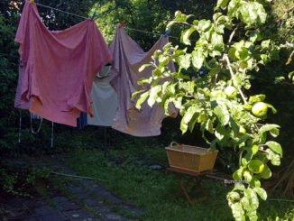 Vollmond im Juli 2020: Sonnenschein auf dem Apfelbaum, Wind für die Wäscheleine