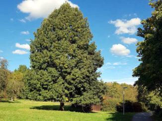Baum in der Herbstsonne