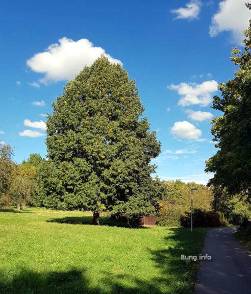 Wetter im Oktober 2020 - Baum in der Herbstsonne