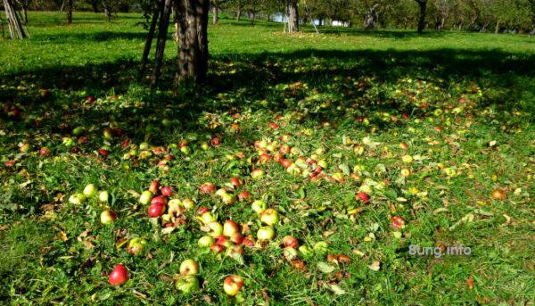 Typisch Herbst! Drachen steigen lassen | Kulturmagazin 8ung.info