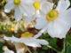 Garten im Oktober als Web Story | Kulturmagazin 8ung.info
