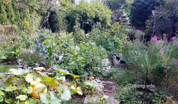 Herbstgarten mit Kürbis
