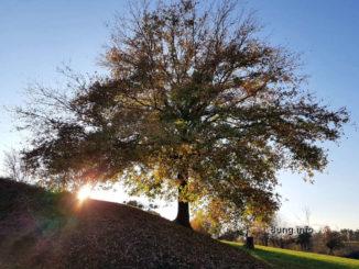 Baum in der Abendsonne im Herbst