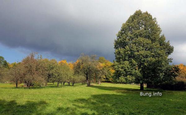 Wetter im Oktober 2020 - Streuobstwiese mit grossem Baum