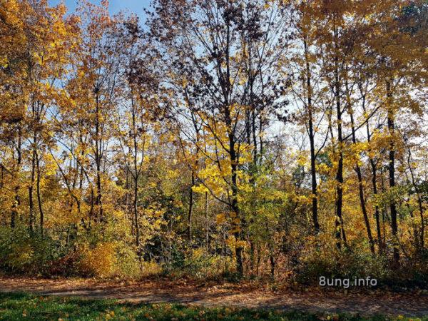 Bäume mit gelben Bättern