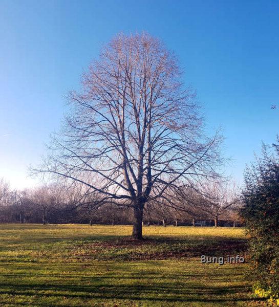 Wetter im Dezember - großer Baum ohne Blätter