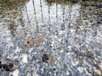 Wetterprognose 12 rauhnächte - Regen, Wasserspiegelung