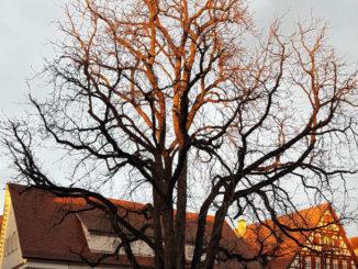 Wetter im Dezember - Baum, grauer Himmel mit Sonnenschein