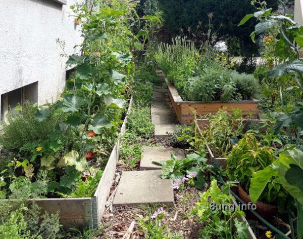 Mein Kräutergarten im sommer