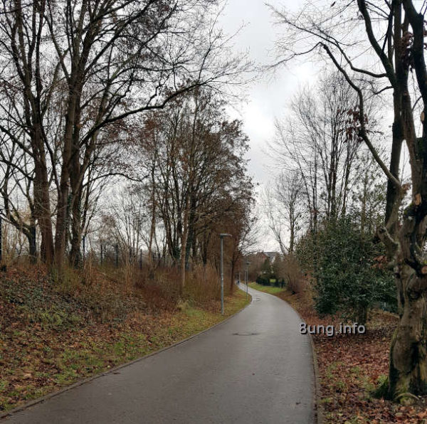 Weg zwischen Büschen und Bäumen
