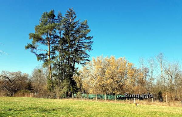 Kiefer und großer Haselnuss-Busch begrenzen die Wiese