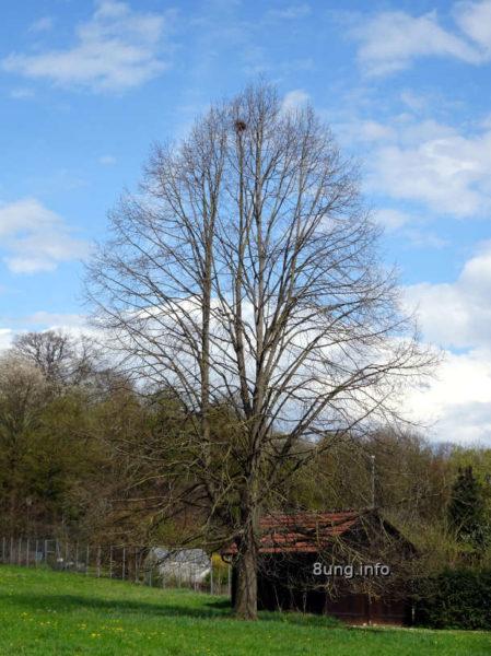 Wetter im April 2021 - kahler Baum mit Vogelnest
