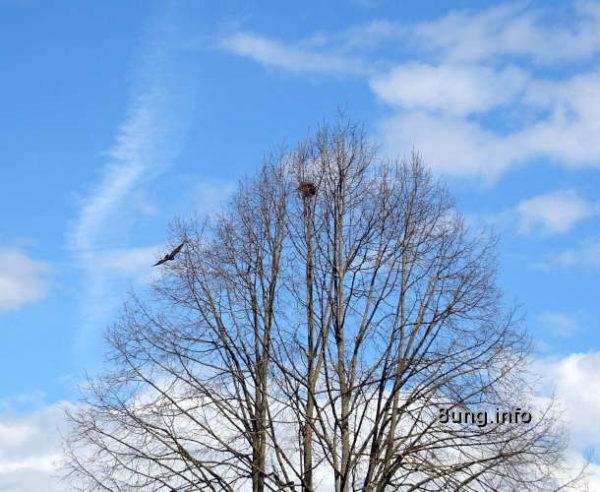 Wetter im April 2021 - Baumwipfel mit Nest und Raubvogel