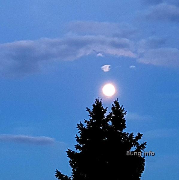 Mai-Vollmond über einer Fichte am blauen Himmel - einzelne graue Wolken