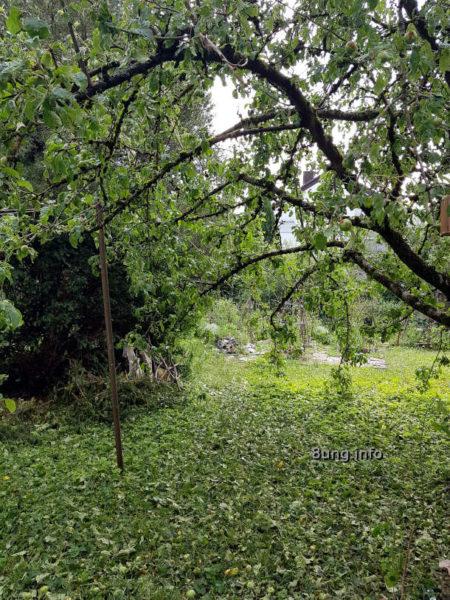 Wetter im Juni: Apfelbaum nach dem Hagel - Apfel und Blätter liegen auf dem Boden