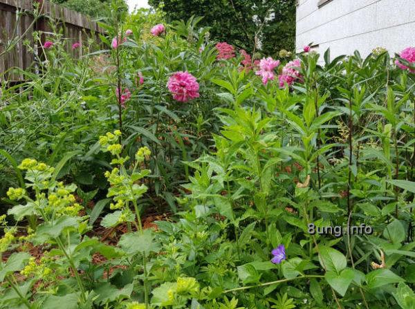 Wetter im Juni: Blumengarten