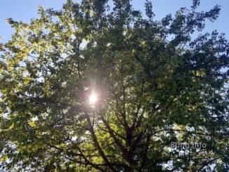 Sonne scheint durch den Baum